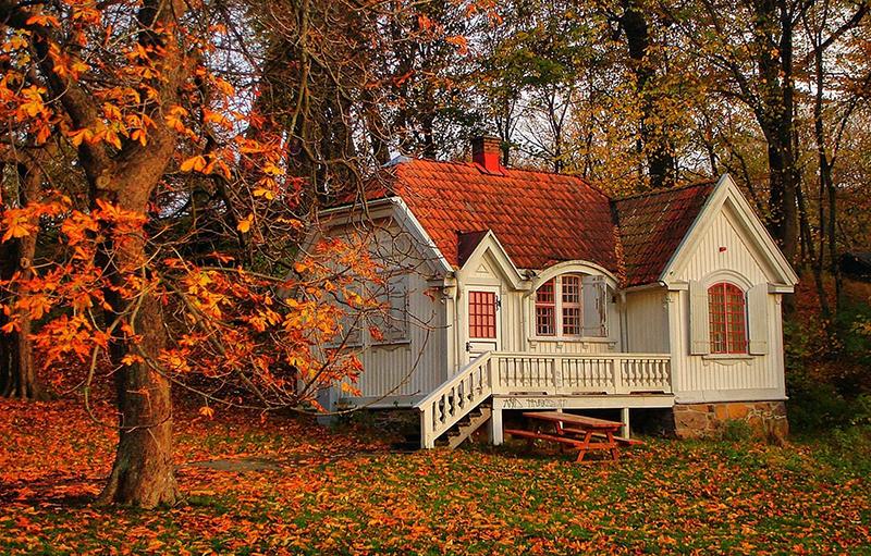 Деревянный дом, лес