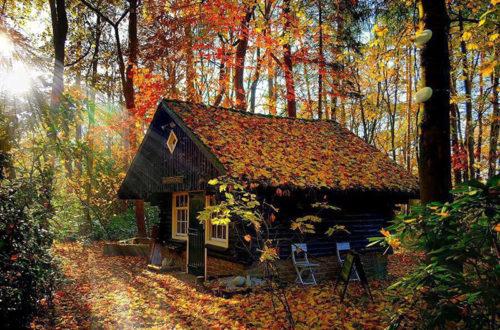 Красивый старенький дом возле леса