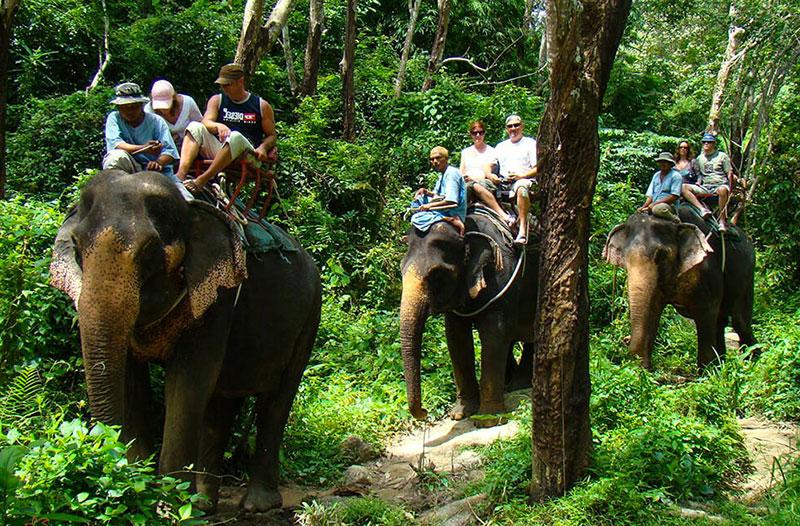 Катание на слонах, , лес, фото