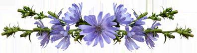 Композиция из цветков цикория