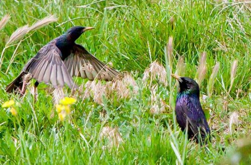 Экология, птицы