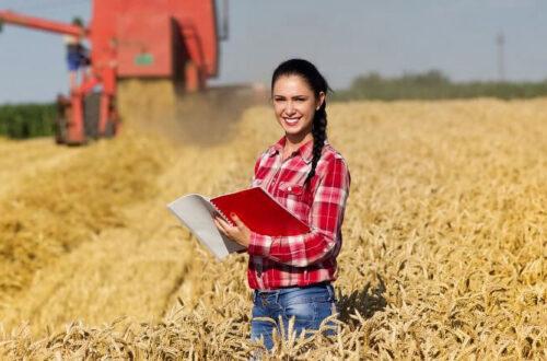 Уборка пшеницы, девушка